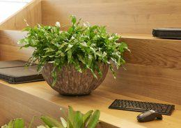 trivsel företag växter