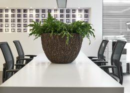 växter företagsinredning