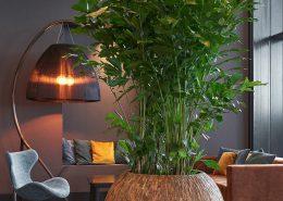 växter trivsel kontor