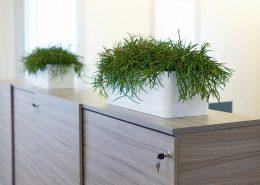 hyr växter företag